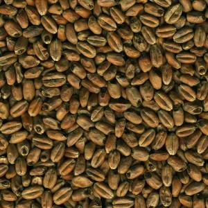 Dingemans pražený pšeničný slad 30