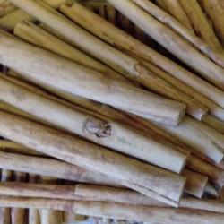 Škorica pravá zo Srí Lanky 5ks